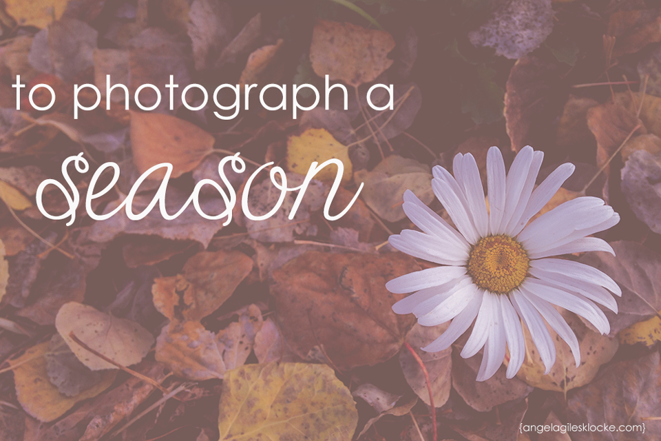 To photograph a season